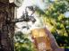 Cider-653x507